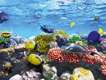 При перевозке не все декоративные рыбки благополучно перенесли дорогу? Ксожалению, расходы на эти потери не уменьшишь