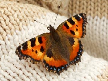 Увидев бабочку зимой, вы явно удивитесь. Так и налоговики будут, мягко говоря, недоумевать, если НДС вы примете к вычету до завершения стройки