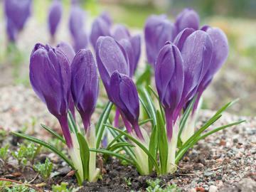 Думаете, красивыми могут быть только цветы? Бухгалтерская отчетность тоже будет прекрасна, если в ней правильно отразить операции по займам