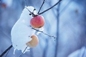 Новости: Прочие события за 9 - 13 января